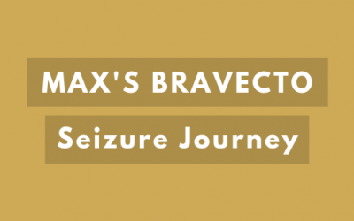 Max's Bravecto Seizure Journey