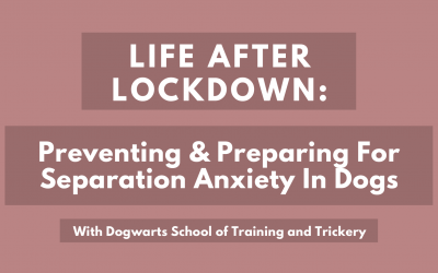 Life After Lockdown: Preventing and Preparing For Separation Anxiety In Dogs