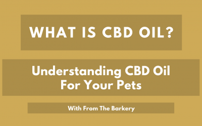 What is CBD Oil? Understanding CBD Oil for Pets
