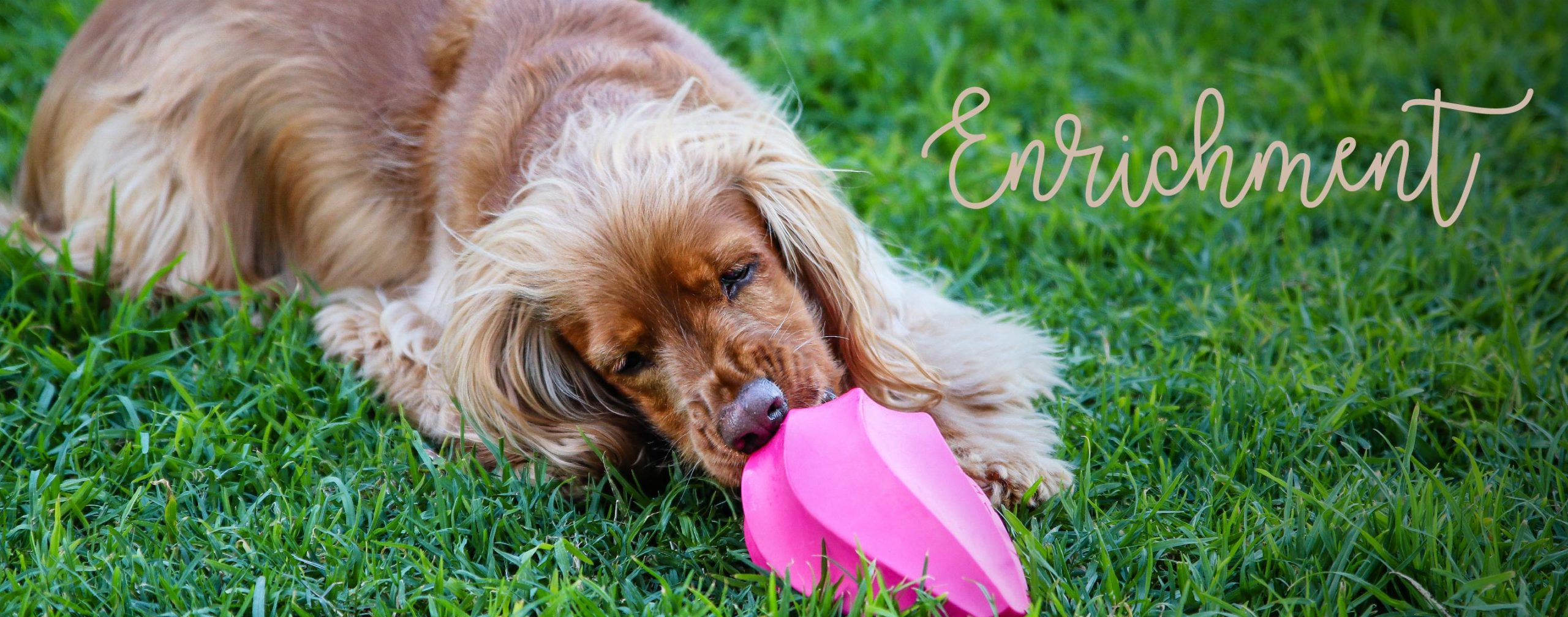 MAX_AND_WILLOW_ENRICHMENT-01